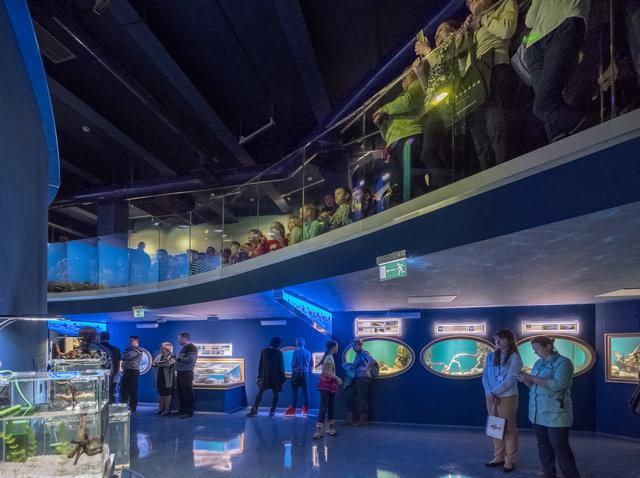 Пространство под трибунами вмещает 7 аквариумов и техническое помещение