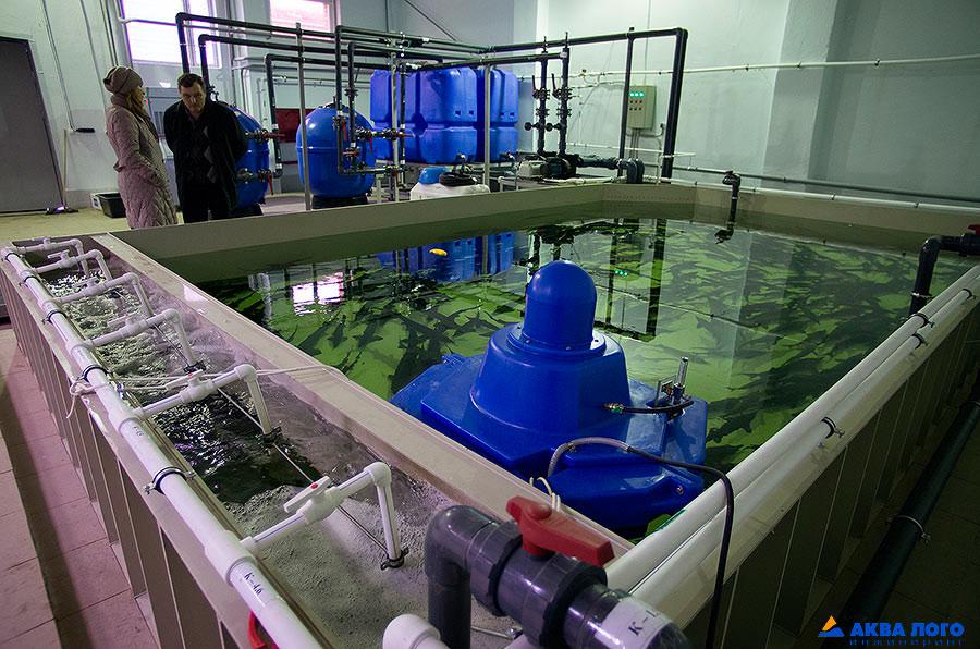 Стоимость оборудования для выращивания рыбы 27
