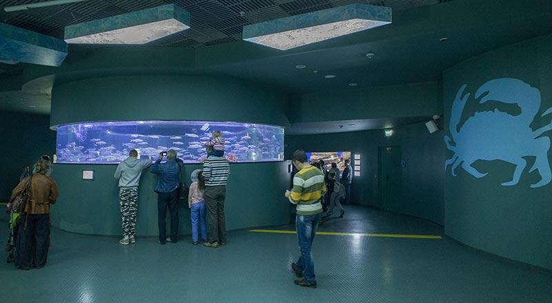 В кольцевом аквариуме объёмом 14 куб. м по кругу непрерывно плавает стайная пелядь