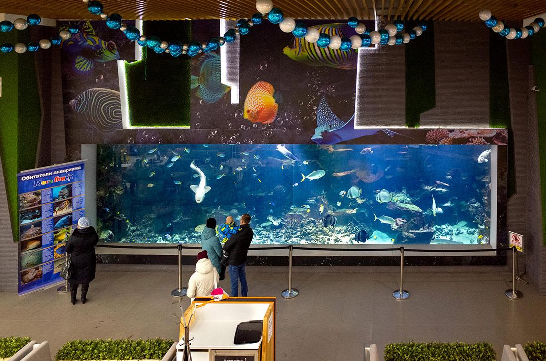 Обитатели 100-тонного аквариума в курском ТРЦ «МегаГРИНН» через три года после открытия выросли и теперь видны издалека