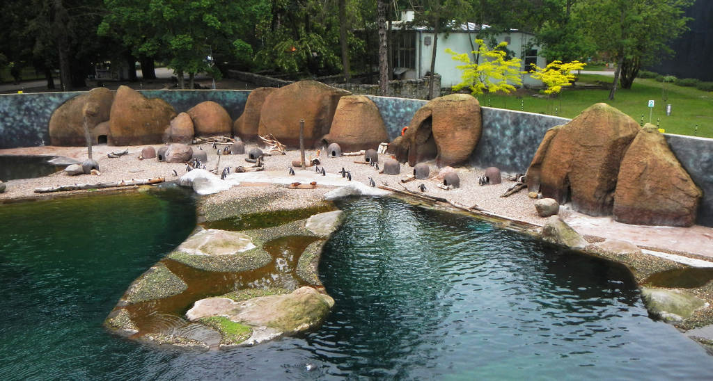 Просторный вольер с пингвинами в «Африкариуме». Вид с «палубы корабля»