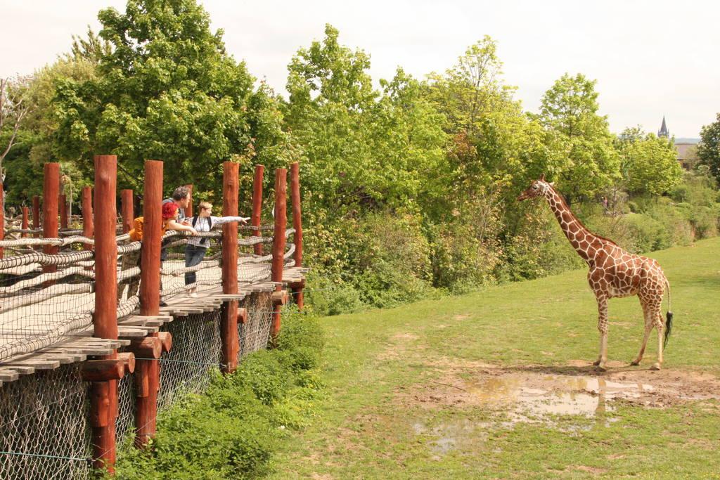 Сафари-парк. Обзор жирафа «на уровне»
