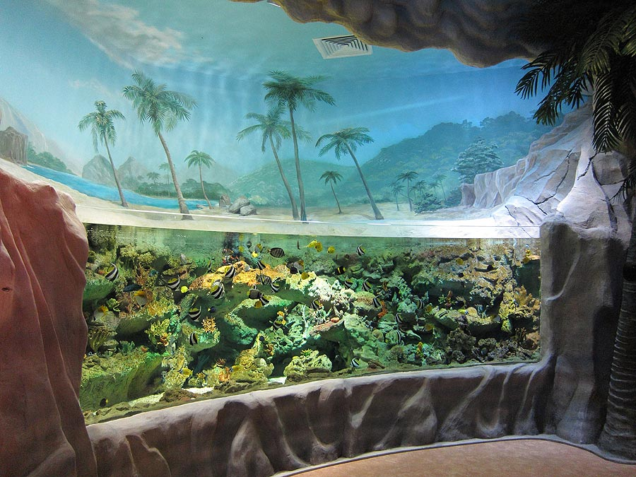 """The exposition """"Seas and oceans"""" starts with open aquarium with bright tropical fishes from the coral reef"""