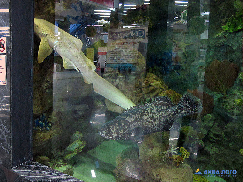 Мегагринн москва фото аквариум