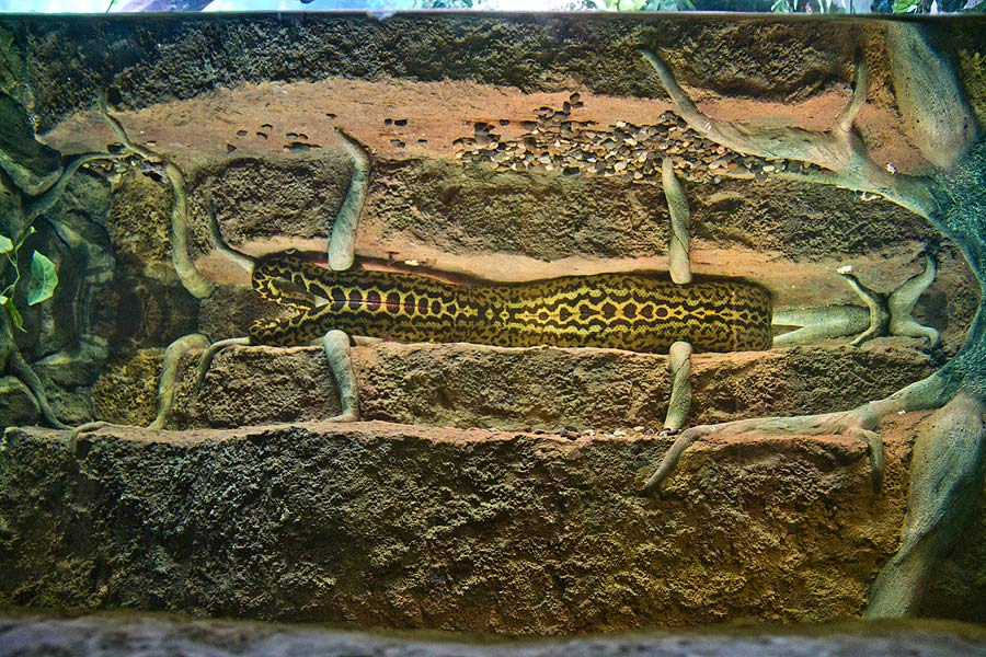 """Reptiles in the exposition """"Forests and steppes"""""""