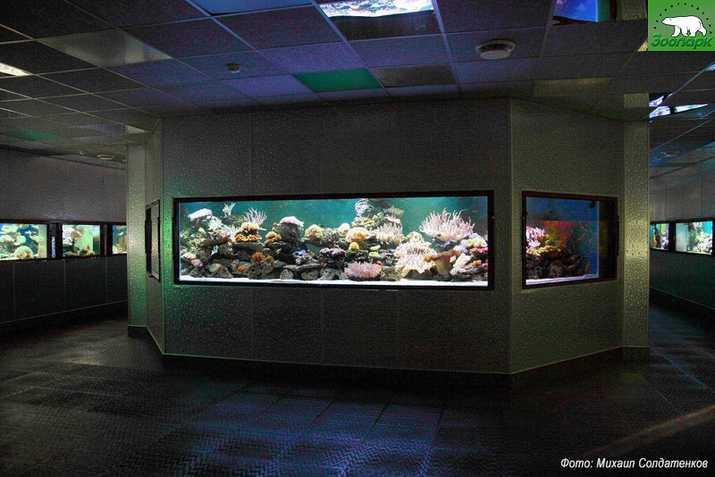 Акриловые аквариумы Аква Лого инжиниринг для Экзотариума Ленинградского зоопарка