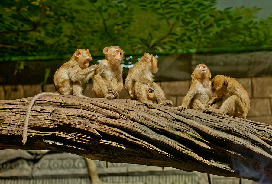 """The aviary with long-tailed macaques in the exposition """"Jungle"""""""