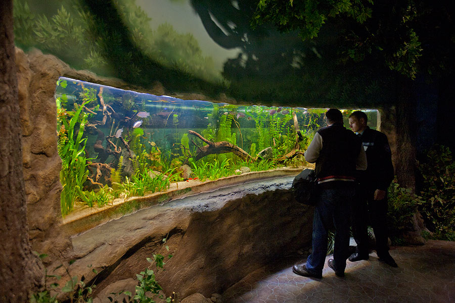 """The freshwater aquarium in the exposition """"Forests and steppes"""""""