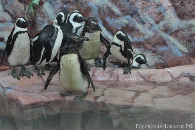 """The penguinarium of """"Roev Ruchey"""""""