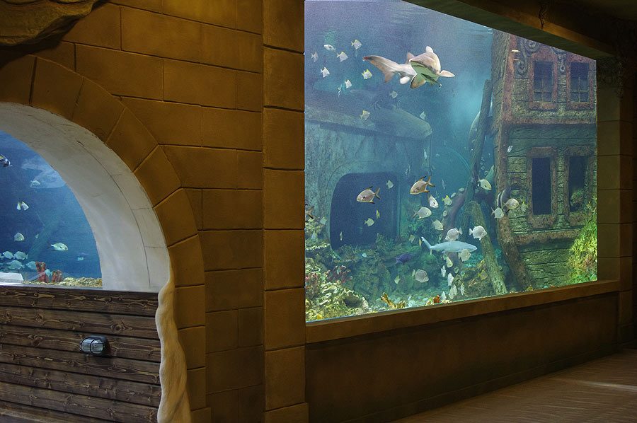 """The large window and a tunnel of the main ocean aquarium in the exposition """"Seas and oceans"""""""