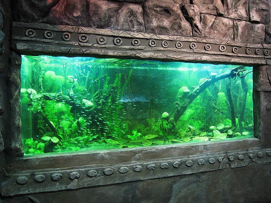 """The freshwater aquarium in the exposition """"Jungle"""""""