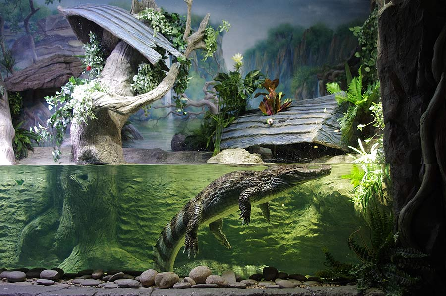 """The aquaterrarium with spectacled caimans in the exposition """"Jungle"""""""