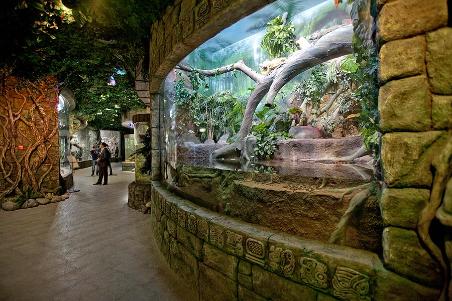 """The aviary with a giant anaconda, a python and a monitor lizard in the exposition """"Jungle"""""""