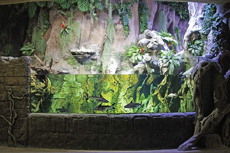 """The aquarium with large bala sharks in the exposition """"Jungle"""""""