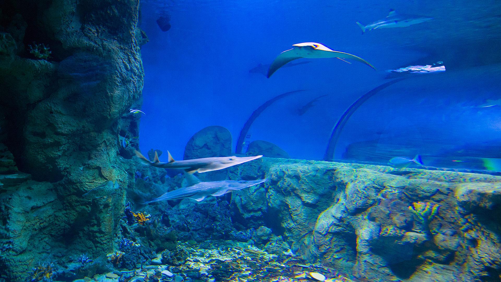 проживания, санатории картинки на рабочий стол подводный мир океана офф-роуда готовят, либо