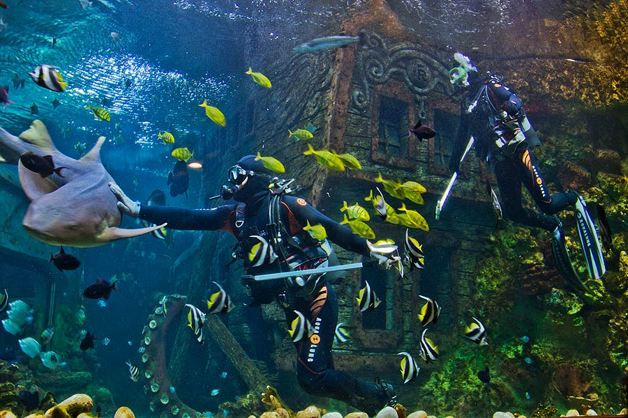 Through the large window of the main aquarium it is easy for visitors to observe the feeding of sharks