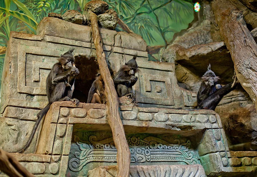 """The aviary with the arboreal monkey mangabeys in the exposition """"Jungle"""""""