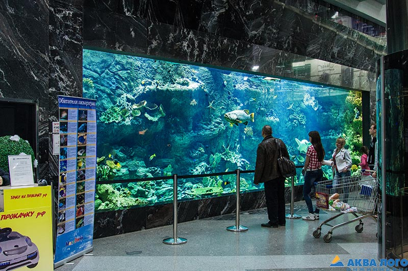 100-ton public aquariums in the cities of Belgorod and Kursk
