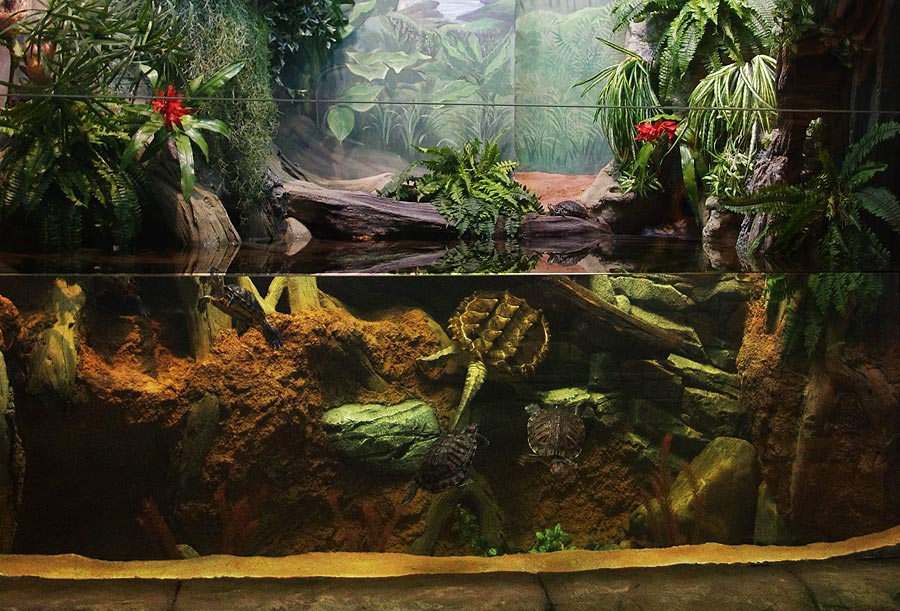 """The aviary with alligator snapping turtle and iguanas in the """"Jungle"""" exposition"""