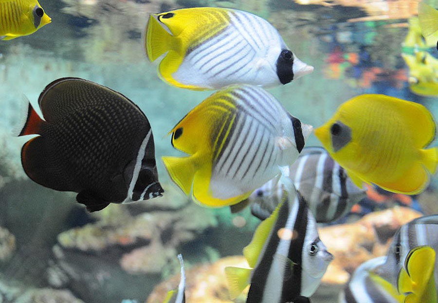 """The tropical species of fish in the exposition """"Seas and oceans"""""""