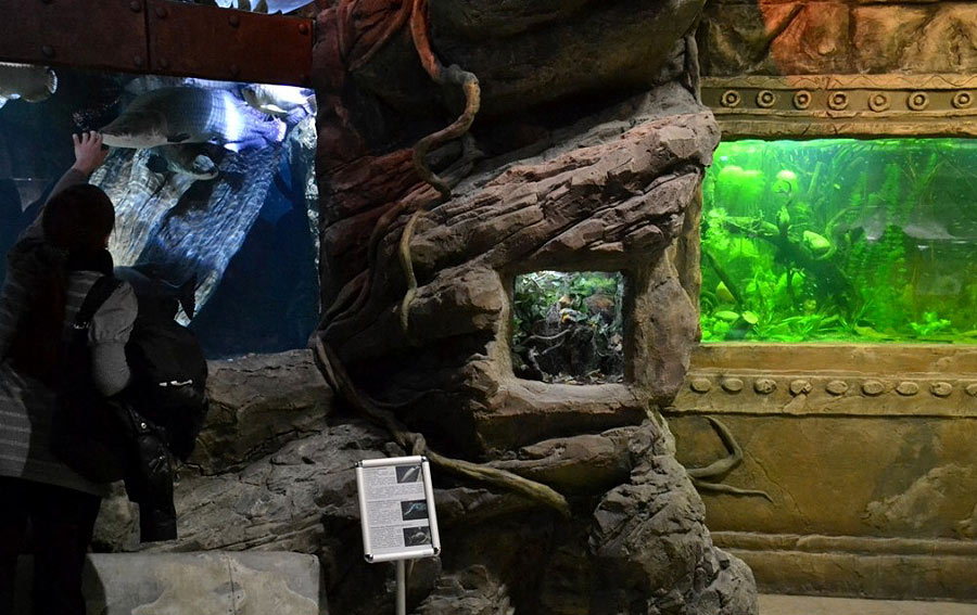 The insectarium in the hollow of the tree between the aquariums with arapaimas and discus
