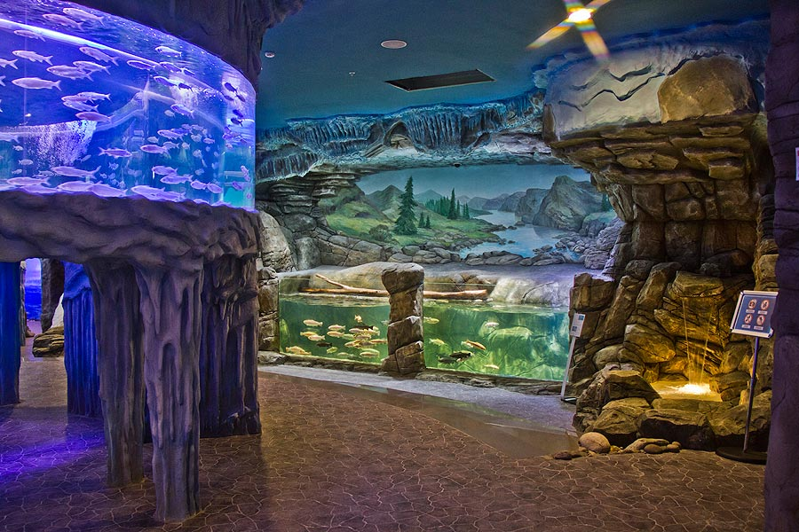 """The wildlife corner in the exposition """"Polar waters"""""""
