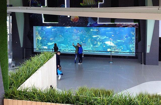 мегагринн москва фото аквариум модель, она