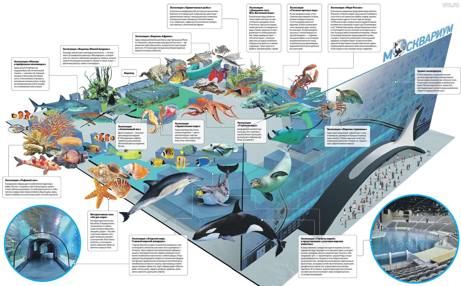 Океанариум петербурга находится в центре города, в комплексе «планета нептун».