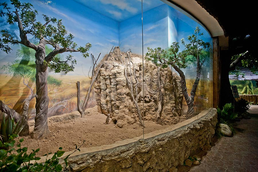 """The aviary of meerkats in the exposition """"Forests and steppes"""""""