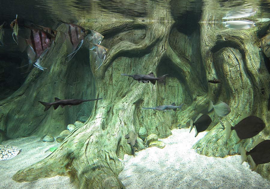 """The aquarium with paddlefish in the exposition """"Jungle"""""""